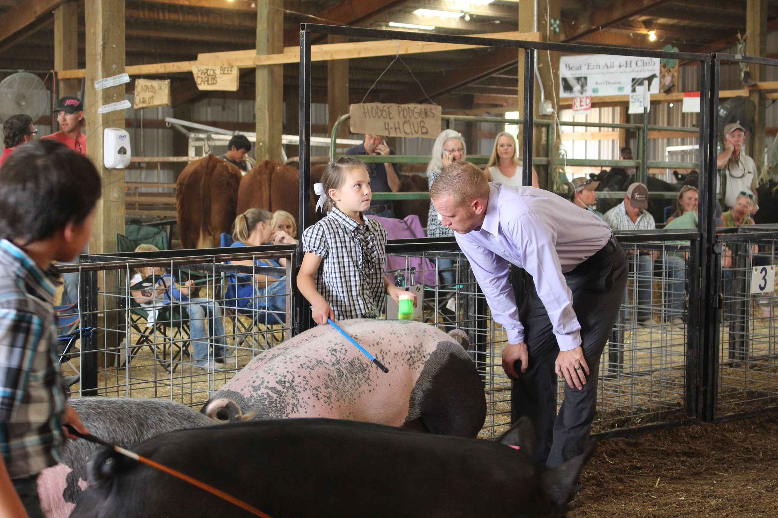 Swine showmanship 037