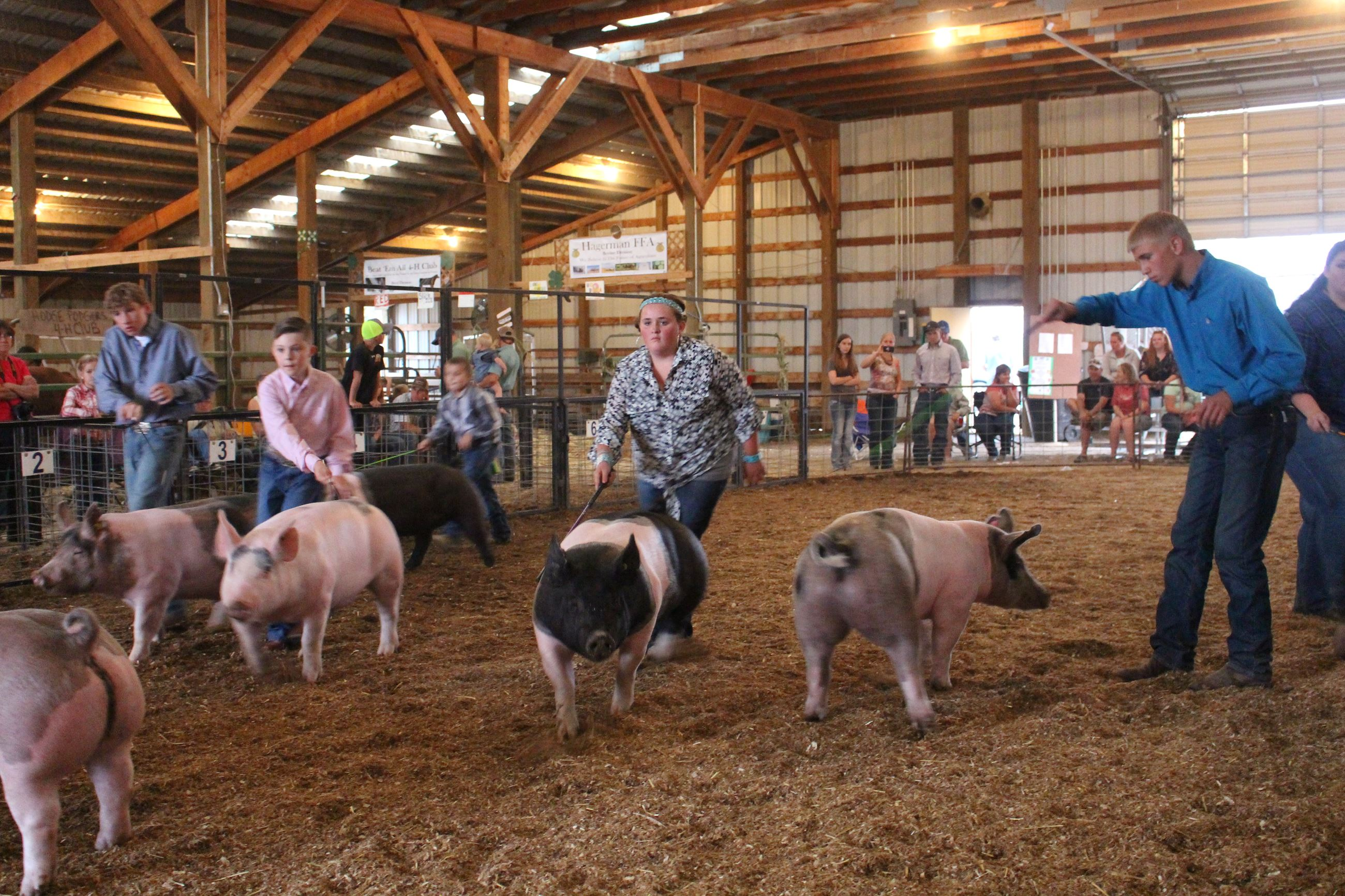 Swine showmanship 112